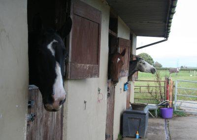 lovetts horse transport 087